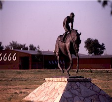 Texas' 6666 Ranch benefits from Top of the Rockies alfalfa cubes fed to their horses.